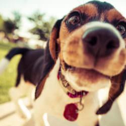 Verbot von Haustieren in einer WEG
